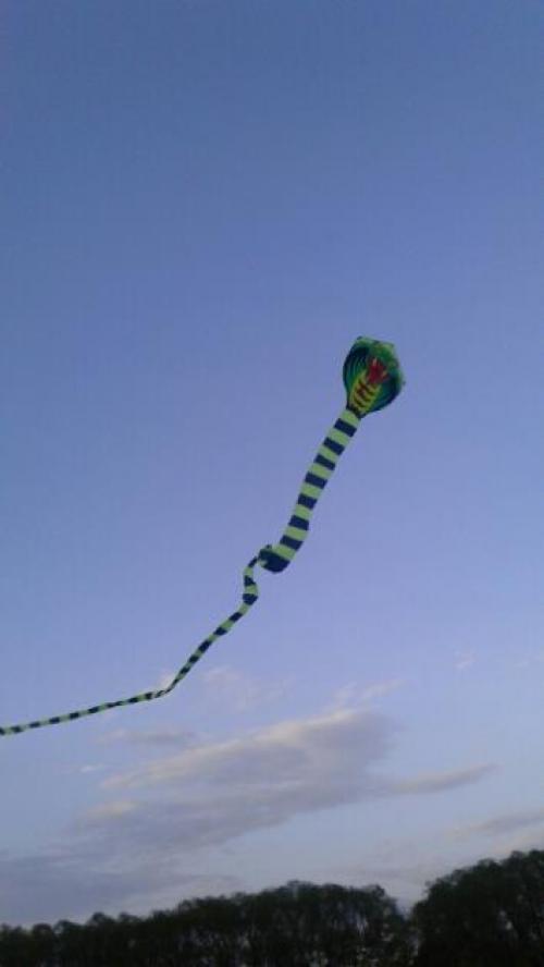 Green Snake Kite 15 m